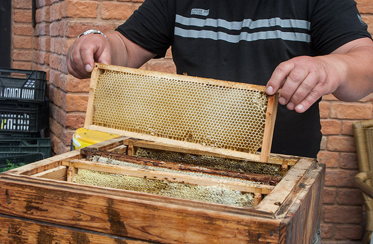 """""""So the bees travel around Poland looking for pollen, and I travel around Poland looking for the bees."""" When he's not chasing bees in his Land Rover, find Darek vending pots of honey and trading anecdotes: """"did you know,"""" he asks, """"beeswax was the original chewing gum of the ancients – here you go, try some."""""""