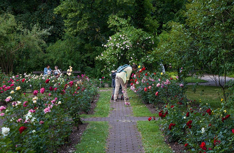 239_botanical_garden-01