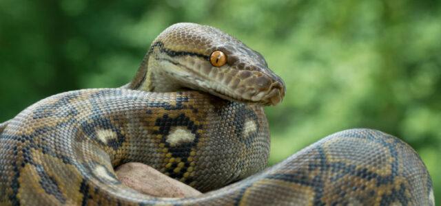Hiss Off: Snake Alert
