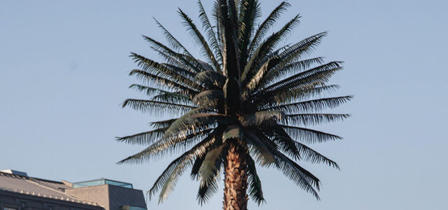 The Perfect Chemis-tree: Warsaw & The Palm!