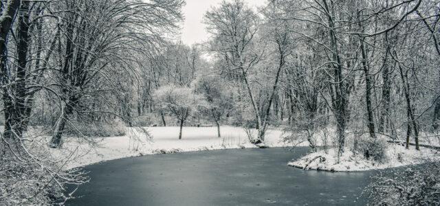 Winter Walks: Park Skaryszewski